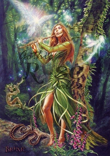 The Faerie Reel Greeting Card